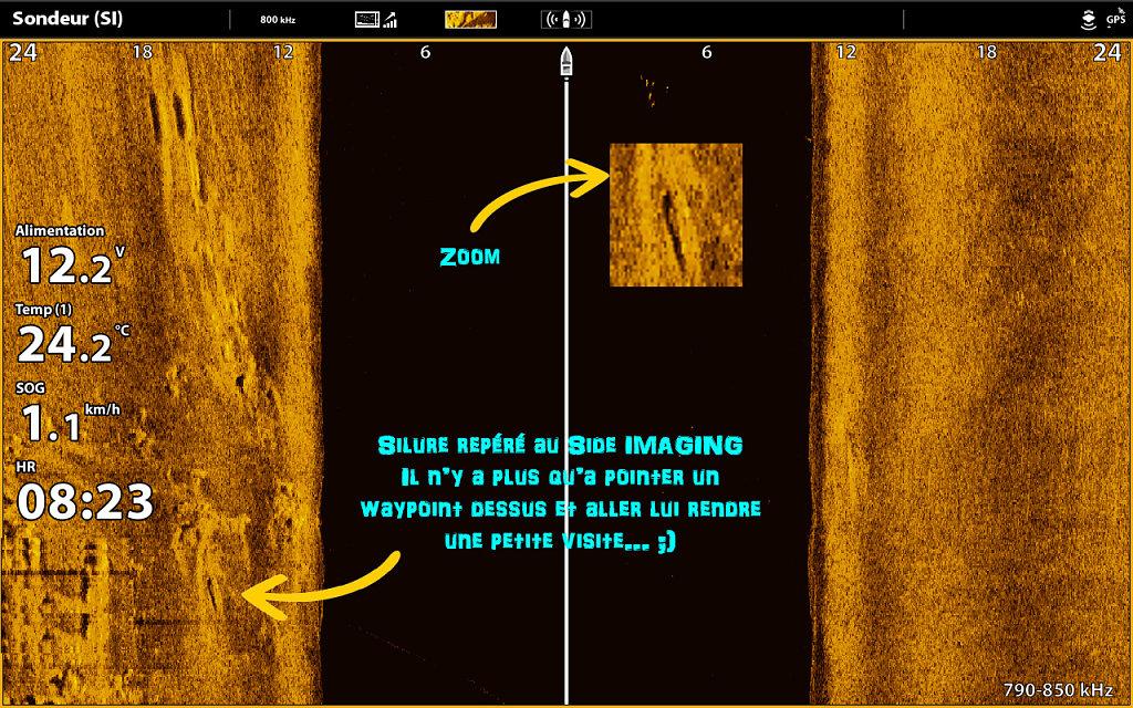 Silure-side-imaging.jpg